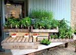 Organic Produce in Spring